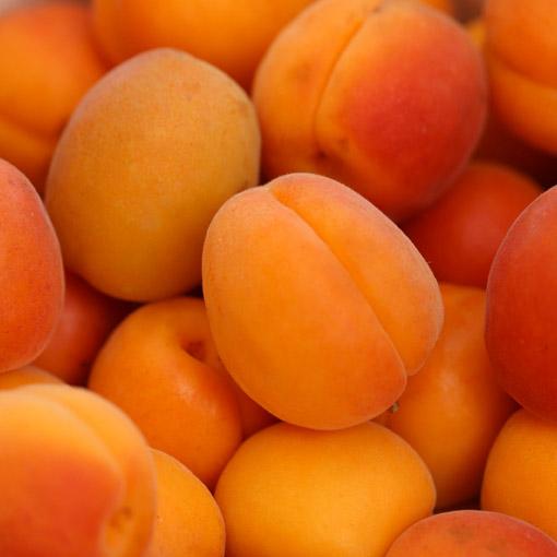Apricot-USA