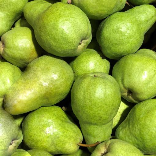 Barlett-Pears