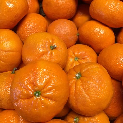 Tangerines Australia-Oranges