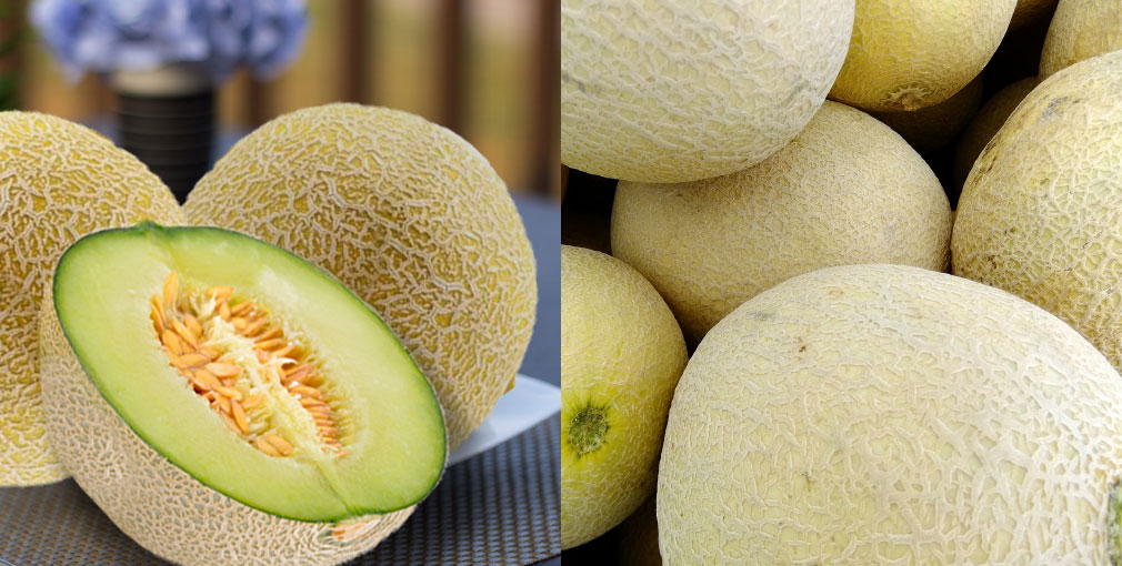 Honeydew-Melon-Fruit