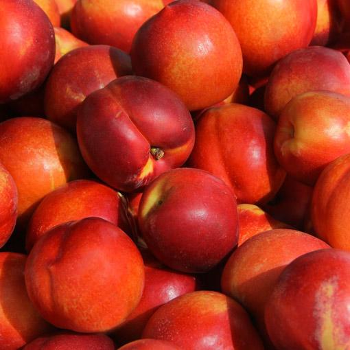 Nectarines-USA