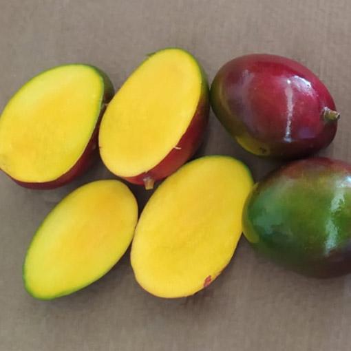 Palmer-Mangos