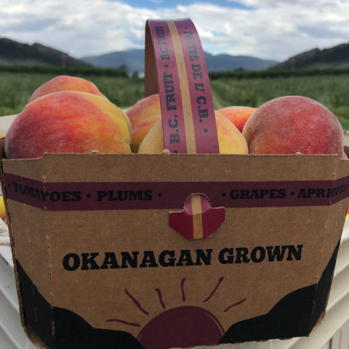 Peaches-Canada