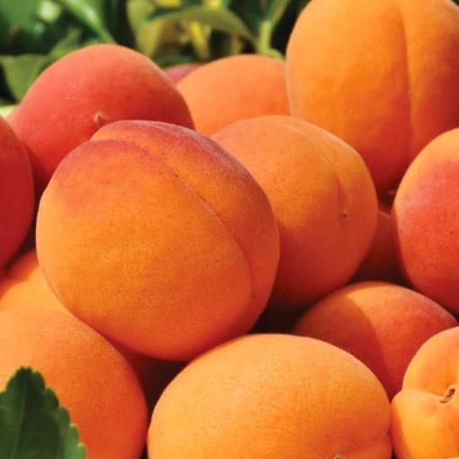 Peaches-USA
