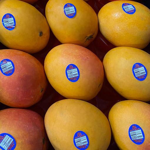 R2E2-Mangos