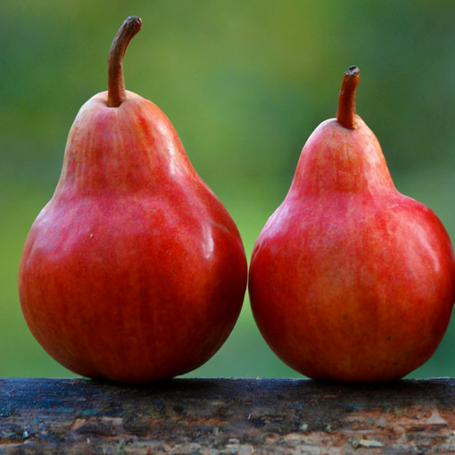 Red-Pear