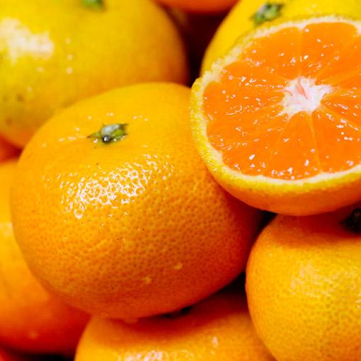 Tangerines-Morocco